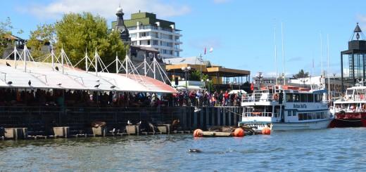 Vista desde el rio de la Feria fluvial y los lobos marinos de compañía :)