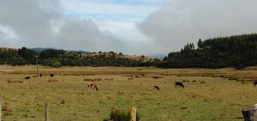 llico-vacas